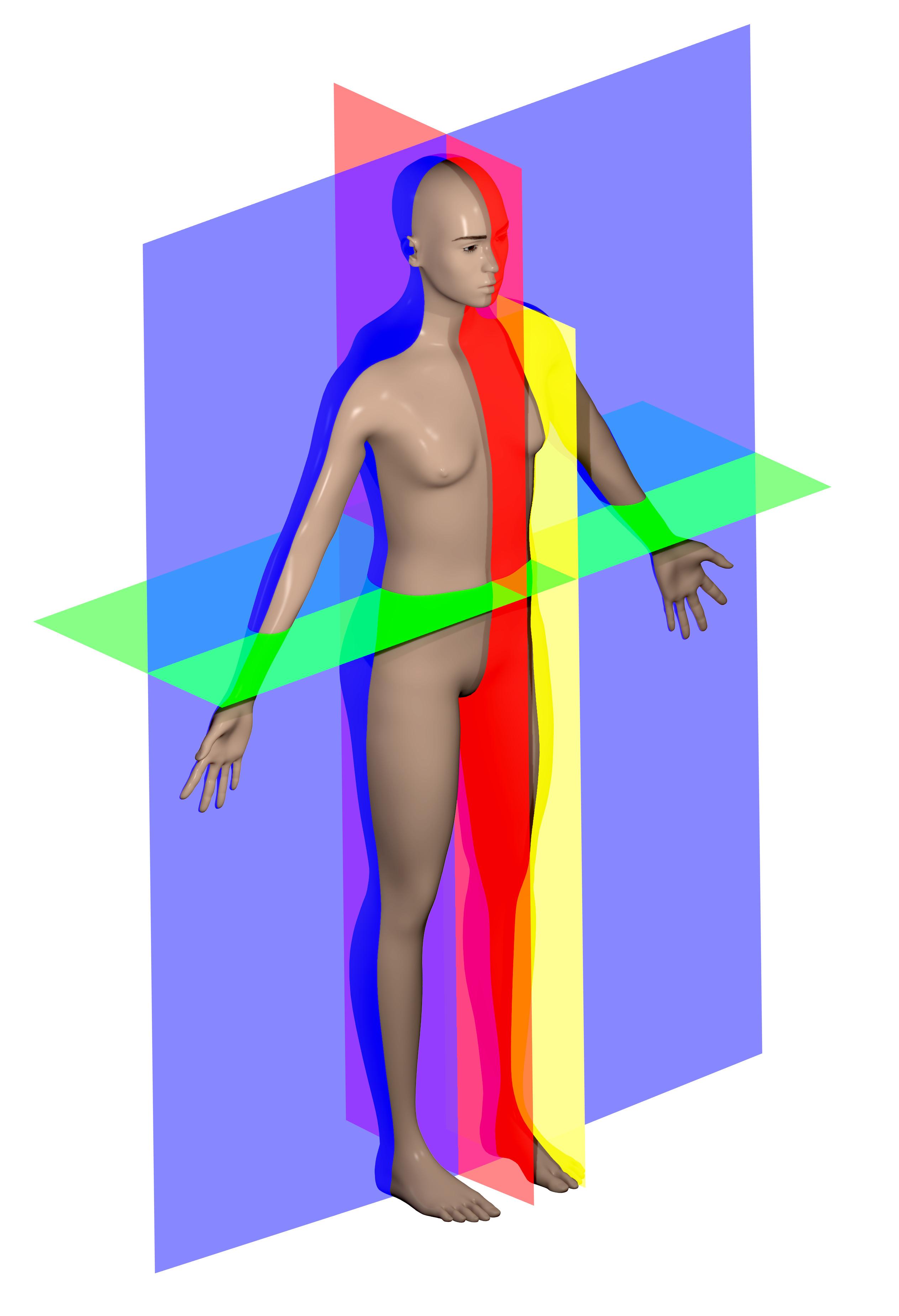 Human anatomy planes, 2014